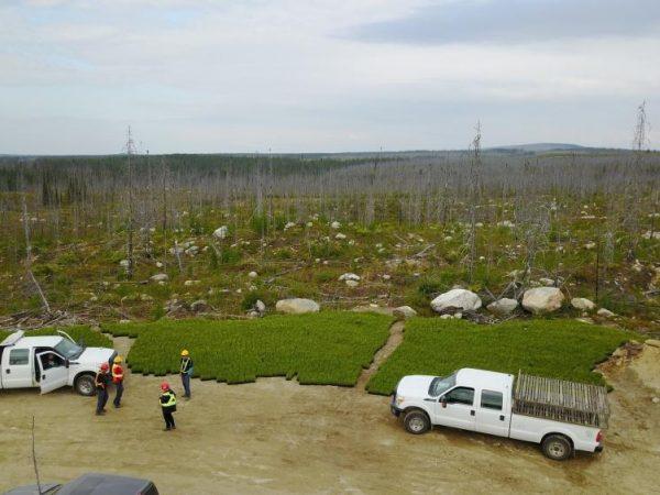 Aménagement forestier